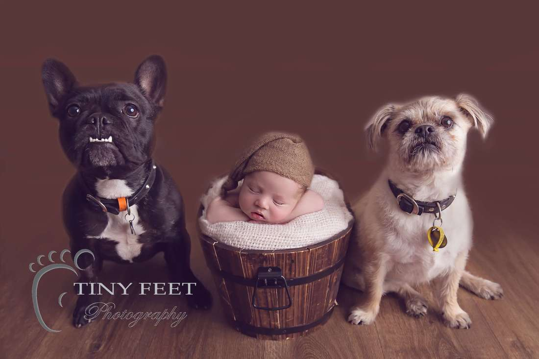 Tiny Feet Photography, newborn baby boy posed chin in hands in bucket with family dogs
