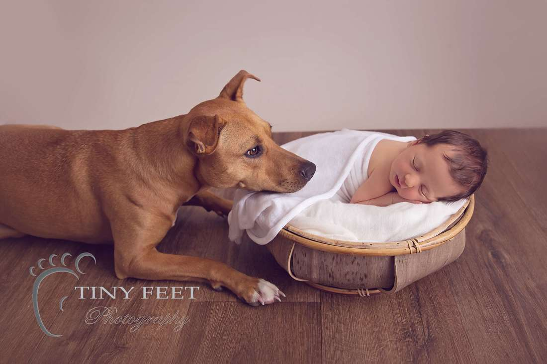 Tiny Feet Photography, newborn baby girl with pet dog