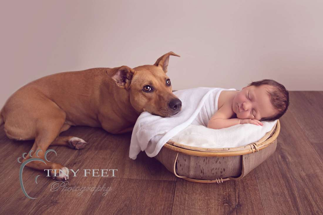 Tiny Feet Photography, newborn baby girl in bowl with pet dog