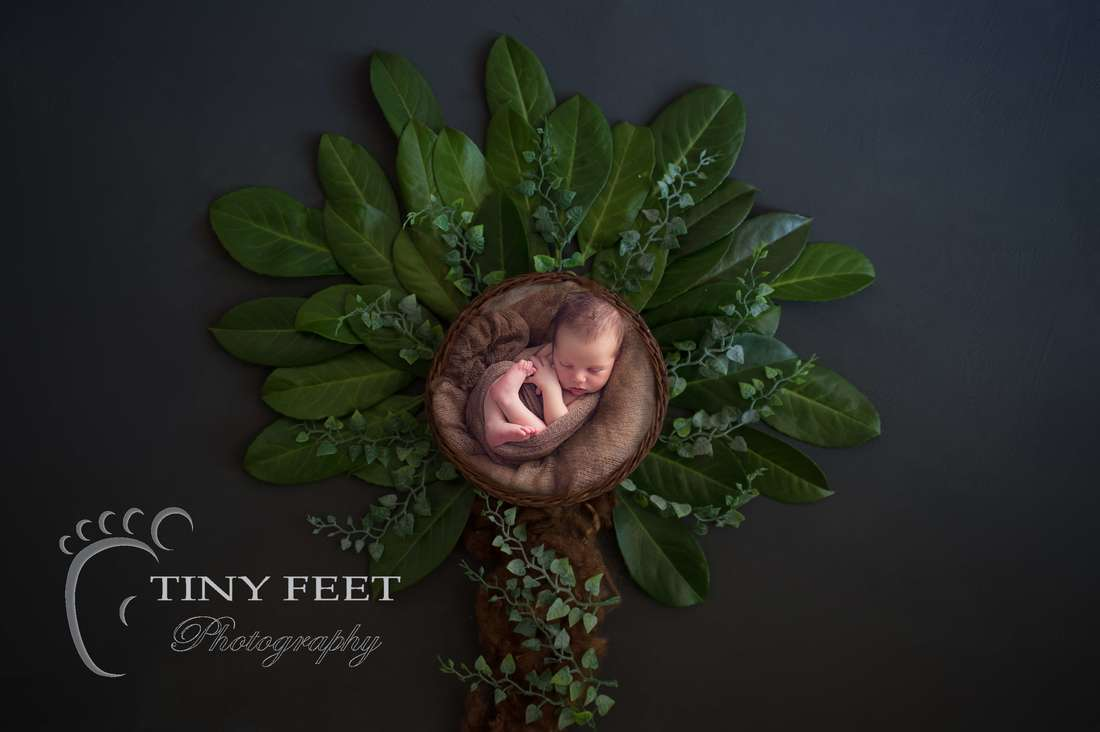 Tiny Feet Photography baby boy posed in tree backdrop